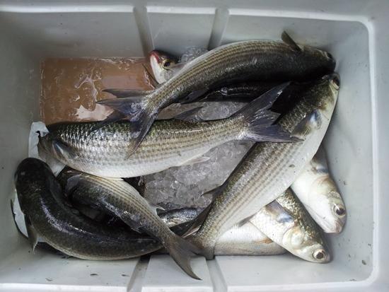fishing 2011-09-25
